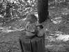 Rock Monument (Alex Durand) Tags: rock leaves log woods sticks