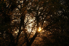 Silhouettes (gripspix) Tags: 20171016 nature autumn herbst tree baum silouettes silhouette sun sonne evening abend