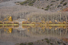 A Symmetrical Autumn Scenery (miltonsun) Tags: autumn autumnscenery autumnleaves northlake easternsierra california highway395 lake landscape mountains clouds sky meadows reflection decay forest outdoor natural water