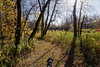 Cortana at Old Mill State Park, Minnesota (Tony Webster) Tags: cortana minnesota oldmillstatepark autumn dog fall statepark argyle unitedstates us