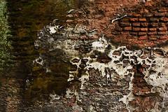 "The wall from History (Thanks for the Favs, comments and views) Tags: architecture brickwork panamcity সোনারগাঁও sunārgāon ibnbattuta mahuan niccolòdeconti ralph fitch fakhruddinmubarakshah isakhan barobhuyanconfederacy worldmonumentsfund watchlistofthe100mostendangeredsites brick red building abandoned ancient outdoor lost green grass moss delicate detailed travel tourism beautiful serene textures dhaka bangladesh ""oldcapitolofbangladesh"" ""capital"" heritage archeology wonder"