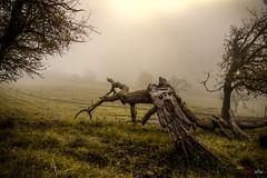 Nach dem Sturm im Nebel