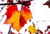Autunno: c'è chi vede le foglie che muoiono, io preferisco osservare i colori che nascono. (WalSpa79) Tags: autunno chi vede le foglie che muoiono io preferisco osservare colori nascono colore color cielo colours come could exposure ragazza romana ricordo regina trieste sexy sky baby una piazza pretty italija naked traktor nikon d750 donna donne woman white wonderful waiting wow always power
