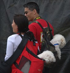 Pet Backpacks (swong95765) Tags: dogs ride backpack canine pets carried animal couple