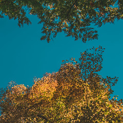 Autumn Sky 2017 (room76com) Tags: sky blue color yellow red green abstract germany trees fall leaves leaf baum blätter cologne nikon d5300 new october nature outdoor outside day sun sunny art tree orange autumn