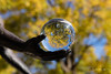Visions of Fall (david_law44) Tags: springfield illinois unitedstates us angel hope washington park central fall maple color outstretched arm crystal ball