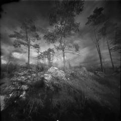 Dream Forest (Foide) Tags: pinhole pinholetree dreamy realitysosubtle 6x6 f160