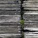 Planks and grass - Planken und Grass