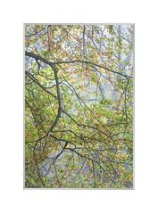 Woodland wander. (John Dominick) Tags: autumn woodland south downs