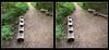 Longwood Gardens Walk 6 - Crosseye 3D (DarkOnus) Tags: pennsylvania bucks county panasonic lumix dmcfz35 3d stereogram stereography stereo darkonus longwood gardens scenic scenery trail path hyper hyperstereo bench treehouse birdhouse crossview crosseye