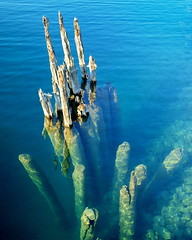 Old Pilings - Abandoned Harbor, Rockport (nelhiebelv) Tags: pilings clear lake huron rockport abandoned alpena michigan harbor