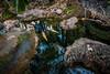 20171007-012-Zebedee Springs-Flickr.jpg (Brian Dean) Tags: creek hotspring wa waterfall caravaning zebedeesprings 2017tour facebook flickr slideshow