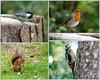 Tentsmuir Forest Wildlife