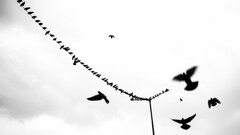 CWC_Hyderabad_Doves_Lines (Sudharsan Ravikumar) Tags: cwc chennai weekend clickers hyderabad street streets lines dove silohutte black blackwhite monochrome