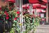 a splash of red (s@ssyl@ssy) Tags: red umbrellas patio planter toronto ontario distillerydistrict flowers café outdoor summer