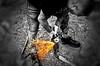 I have an axe to grind (ska 1963) Tags: axe shorts tattoo tattoos tattooed tatts boots grinder sparks blackwhite blackandwhite blackwhiteandcolour adobe picasa 500px photobox photo photography flickr google work treefelling yahoo facebook explore images image lightbox mymedia media cool toolwiz autofocus search creative icloud myphotos myphoto photostream pics pix blog england gb uk