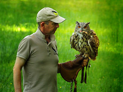 Hello bird, you have to learn a lot - enjoy this reward ;-) (Ostseeleuchte) Tags: training übung schulungfürdenvogel exerciseforthebird reward belohnung wildparkeekholt eule owl