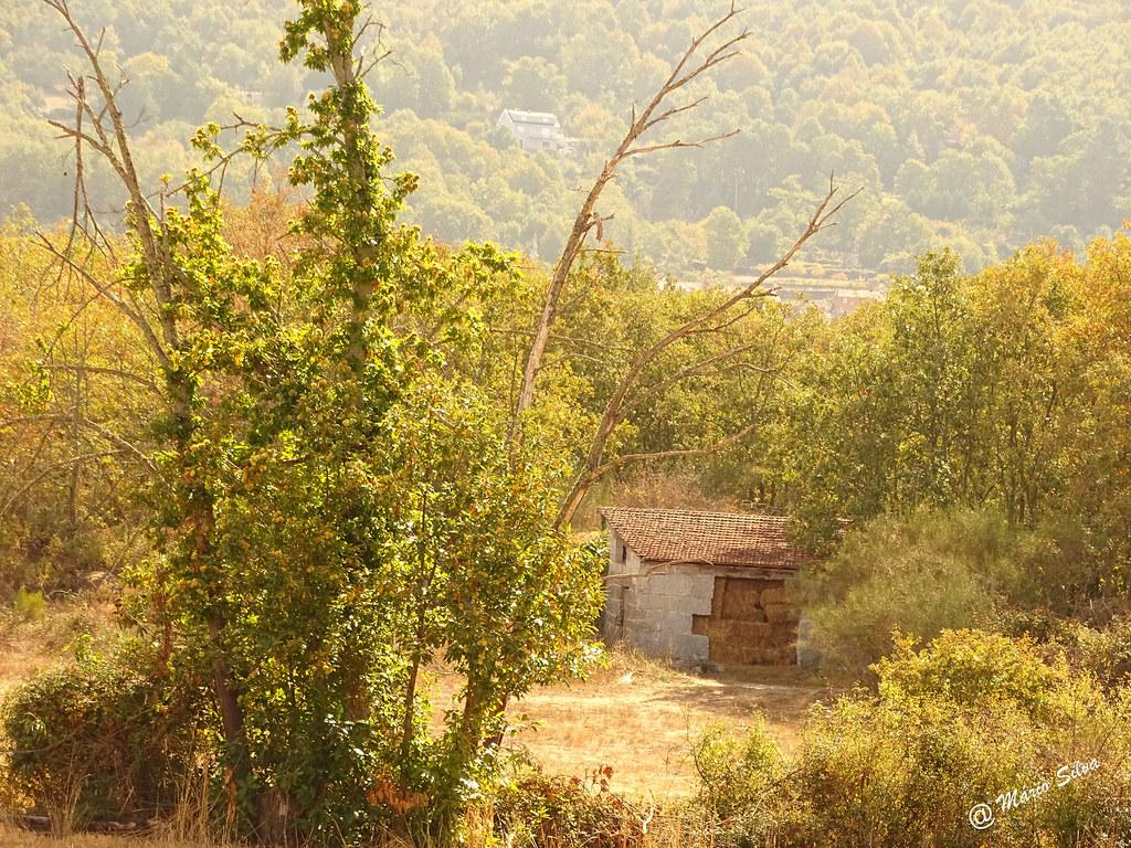 Águas Frias (Chaves) - ... o armazém cheio de palha entre as árvores...
