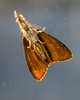 GAM Day 276-17 underside of moth (gamulryan) Tags: moth underside