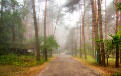 Morning in a pine forest (kud4ipad) Tags: 2016 morning prokhorovka forest tree fog road building landscape ukraine smcpentaxda1645mmf40