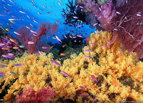 Wallpaper Pemandangan Dalam Laut A Photo On Flickriver