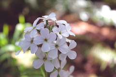 flowers-are-beautiful-humans-are-ugly (FADICH PHOTOGRAPHY) Tags: oly olympia washington fadichphotography 2017 nature park tumwater tumwaterfalls falls plants trees river