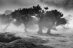 Prophecy (*Capture the Moment*) Tags: 2017 fog insel island laurel lorbeer madeira mist nebel pauldaserralowlands sonye18200mmoss sonynex7 wetter wolkenclouds foggy