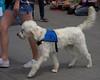 Healing Hounds (Scott 97006) Tags: dog canine animal servicedog service trained cute