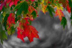 first sign of autumn (mariola aga) Tags: autumn tree leaves colors seasonchange selectivecolors distortion