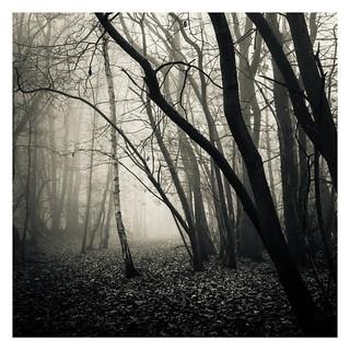 Horsford Woods 06 Dec 2016