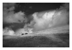 Hurricane (paolo paccagnella) Tags: paccagnellapaolo primephoto canonequipment eos5dm3 territorio blackandwhite minimal minimalism horses clouds freedom landscape paesaggio cielo cavallo wwwphpphotographycom yellow yahoo:yourpictures=art yahoo:yourpictures=monochrome yahoo:yourpictures=blackandwhite exhibition dick italy italia october phpph phpph©2017 flickr foto bn bw biancoenero lucania calabria