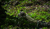 IMG_6220 (Phil Photographs) Tags: airsoft airsoftphilippines ar57 aegrifle assaultrifle gilasatatpampanga semperfidelis semperfi callyourhit bbgun toygun