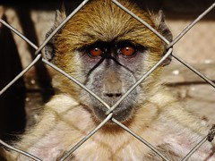"""Yellow Baboon • <a style=""""font-size:0.8em;"""" href=""""http://www.flickr.com/photos/152934089@N02/37582667962/"""" target=""""_blank"""">View on Flickr</a>"""