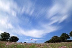 brisk fall weather. (cate♪) Tags: cosmos clouds flow