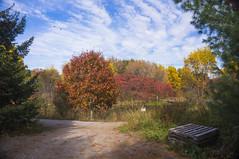 Fall 2017 - Urban Central Experimental Farm (lezumbalaberenjena) Tags: cef central experimental farm ottawa 2017 fall autumn automne autumne otoño otoñal oak pond lezumbalaberenjena
