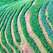 rice terrace - 12