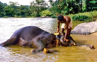 Elephant's wellness hour