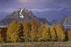 You can't hide your true colors as you approach the Autumn of your life (PhotoArt Images) Tags: usa autumn fall mountmoran trees mountains wyoming photoartimages nikond810 nikon80400