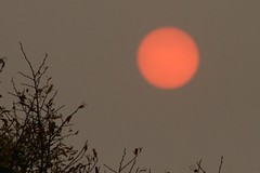 Photo of Red Sun 1
