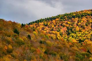 NH Foliage