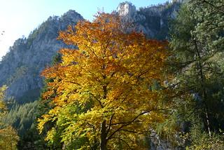 Schneeberg Herbst