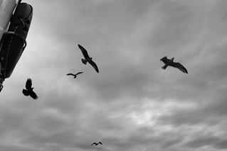 Hungry Birds.