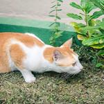 The art of stalking prey thumbnail