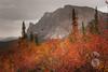 Bright foliage (Storm'sEndPhoto) Tags: 2011 anselsiegenthaler alaska arctic autumn colors daltonhighway haulroad iceroad sukakpakmountain