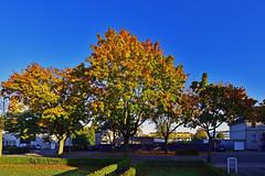 HerbstStillLeben (Michael Döring) Tags: gelsenkirchen bismarck marschallstrase herbststillleben afs1424 d800 michaeldöring