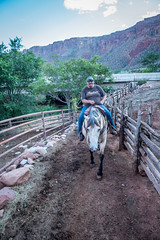 1 Damon Suiter Horseback riding.jpg