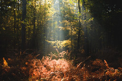 schöner schein... (st.weber71) Tags: wald waldboden wärme licht sonne sonnenstrahlen sonnenschein sonnenlicht bäume nikon nrw niederrhein natur outdoor d800 deutschland hünxe gegenlicht rheinland romantik morgens