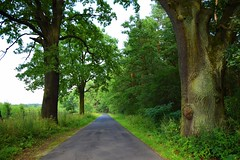summer moods (JoannaRB2009) Tags: summer mood dolnyśląsk dolinabaryczy polska poland path road green nature oak tree trees