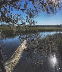 In the wild Lake Tree Reflection Water Nature Tranquility Outdoors Beauty In Nature Bare Tree Tranquil Scene No People Day Branch Scenics Marsh Landscape Sky Georgia Savannah (mikedunnit) Tags: lake tree reflection water nature tranquility outdoors beautyinnature baretree tranquilscene nopeople day branch scenics marsh landscape sky georgia savannah