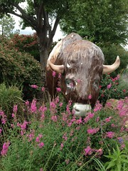 Buffalo, Central Park | Ardmore, OK (aimeedars) Tags: spiritofthebuffalo centralpark buffalo paintedbuffalo paintedsculpture painted statue